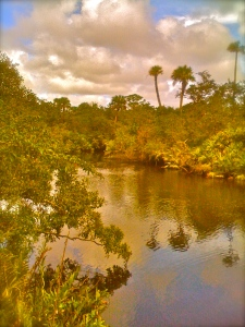 North Fork of the St Lucie River is fed by Five and Ten Miles Creeks in St Lucie County. Once the glorious headwaters, they are today hardly recognizable.