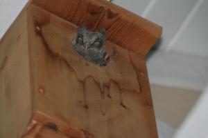 baby in nesting box