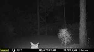 MOULTRIE DIGITAL GAME CAMERA by Dr Goforth.