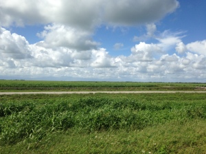 Mile upon mile of sugar fields is the view while  traveling south of the lake.