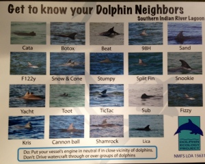 S. IRL dolphins fins/names created by Nic Mader 2013.