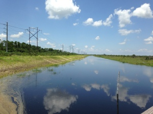 Caulkins Grove off of Citrus Blvd. is a pilot project of the SFWMD for water farming. (Photo Jacqui Thurlow-Lippisch 7-18-14.)