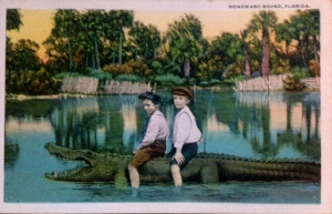 Alligator post card collection ca. 1910. (Thurlow collection.)