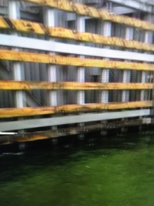 Paint colored shocking green algae at the gate entering Lake Okeechobee,     2009. (Photo from video by Jacqui thurlow-Lippisch)