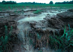 "Fertilizer, pesticides and herbicides ""run-off"" crops during a rain storm. This is an example of non-point pollution. Lynda Betts, United States Dept. of Agriculture. (Photo, public domain.)"