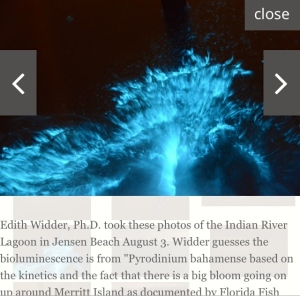 Bioluminescence in the IRL photographed by Dr Edie Widder.