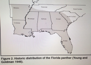 "This map from the state of Florida's ""Multi-Species Recovery Plan,"" shows the historic distribution of the Florida Panther, 1999."