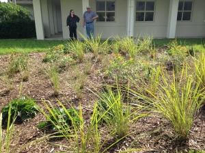 Native grasses.