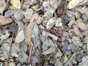 Leaves from the trees in the yard are used as mulch.