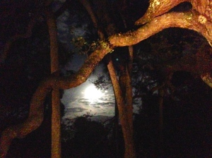 Moon through the giant oak tree at my parents house, 11-6-14. (Photo Jacqui Thurlow-Lippisch)