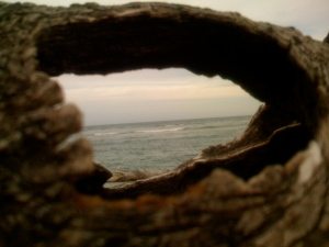 Looking out to the Atlantic Ocean through and old black mangrove that was exposed by erosion of Bath Tub Beach,  2009.