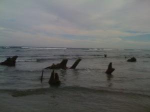 Ancient swamp on ocean side....