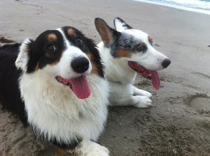 Bo and Baron at the St Lucie Inlet.