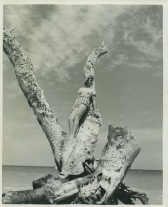 Old tree. (Whiticar, Ca. 1960s)