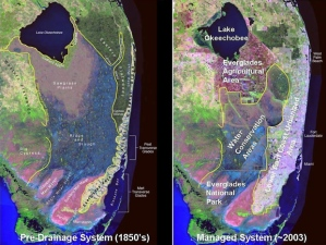 South Florida's southern Everglades, 1950 vs. 2003. (Map courtesy of SFWMD.)