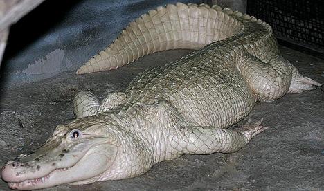Florida Fish And Wildlife Jacqui Thurlow Lippisch