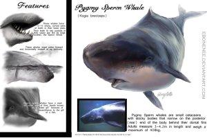 Pygmy Sperm Whale.(Public.)