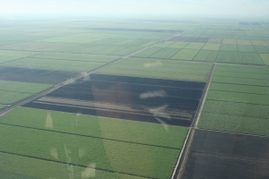 Today's black gold south of Lake Okeechobee. (Photo JTL, 2014)