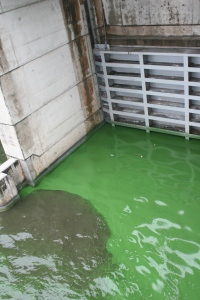 Algae bloom on west side of S-308.