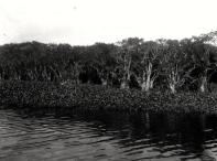 Florida Memory Project, photo by John Kunkel Small 1869-1938.