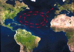 Migration route loggerhead sea turtle.