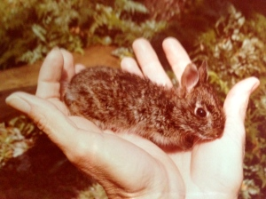 A baby rabbit in my mother's hands, Sewall's Point, 1974. (Thurlow Family Album)
