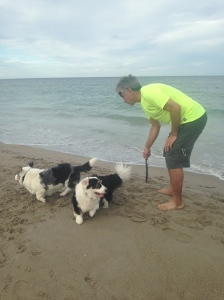Playing  fetch with Bo and Baron, (Photo JTL)
