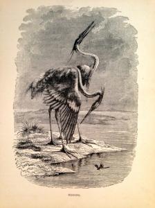 3. Herons