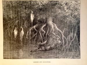 5. Alligator