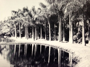 A Lagoon on the Mt Pisgah Property, ca ca. 1950 (Photo Aurthur Ruhnke via Sandra Henderson Thurlow.)