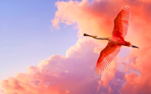 Roseate Spoonbill image, public. http://7-themes.com/6946210-roseate-spoonbill.html)
