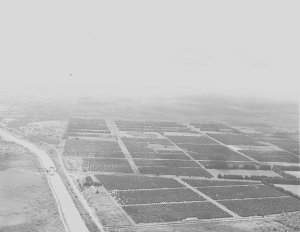 Orange Groves and C-44 canal 1964. A Ruhnke.
