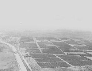 Orange Groves and C-44 canal 1964. A Ruhnke.