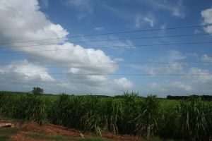 Sugarcane has a long history in Cuba that is very ties to the U.S.