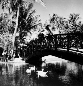 the Tiki Hut and pond, Frances feeding her swans. (Aurthur Ruhnke courtesy o Sandra Thurlow, 1961)