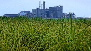 Sugar production site, public photo