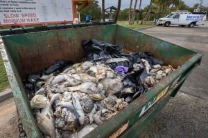 IRL fish kill dumpster, John Moran 2016.
