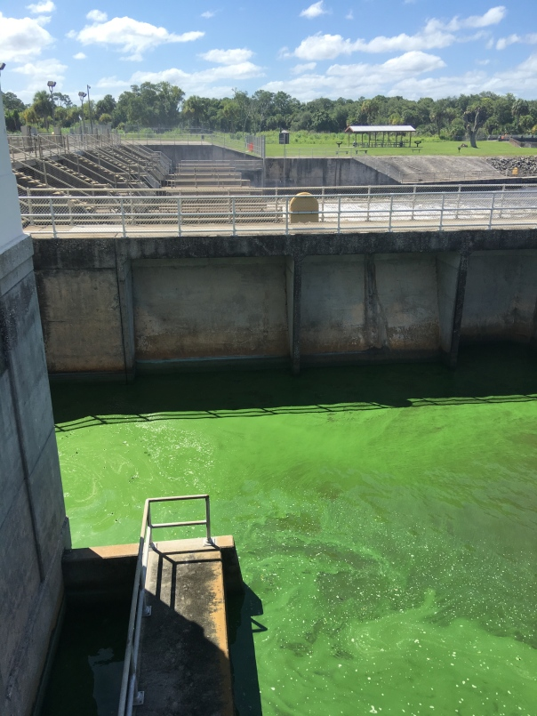 Looking north over algae bloom and 7 gates releasing Lake O water and agricultural canal C-44 water.