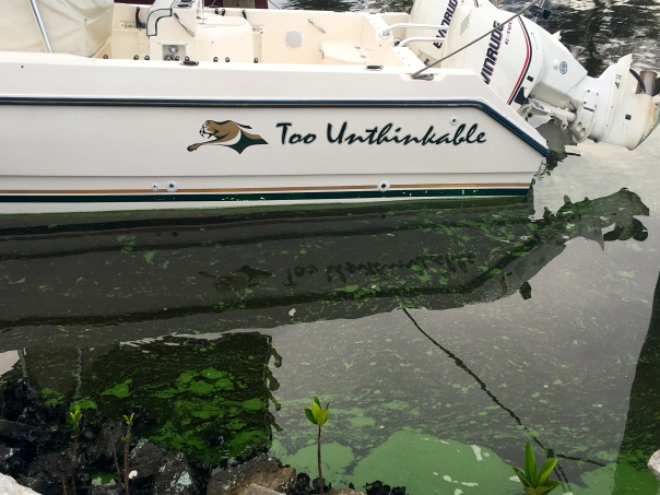 """Too Unthinkable"" sits in the algae waters of the St Lucie River. JTL"