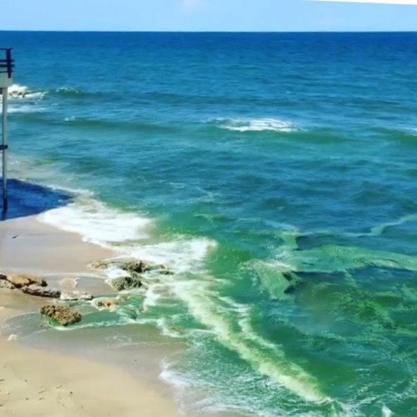 Tiger Shores-ocean of algae July 2016 (Evan Miller)