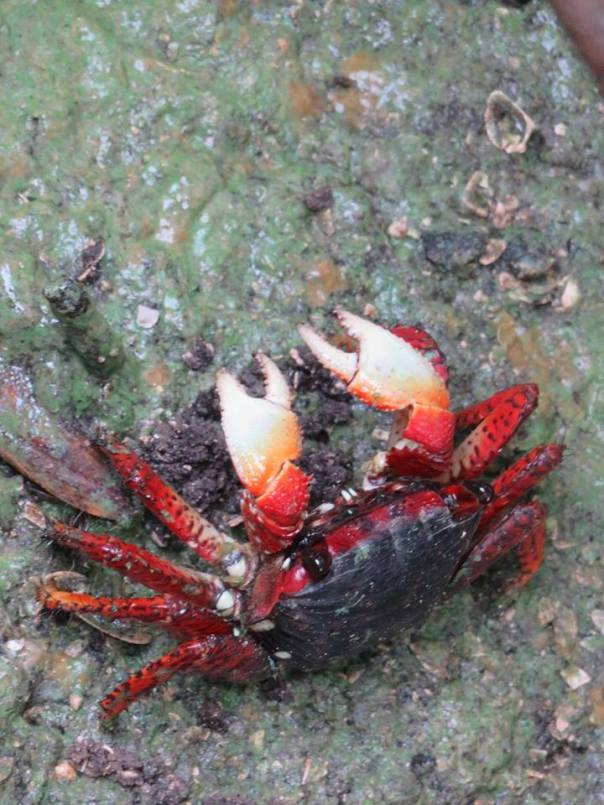 Crab...