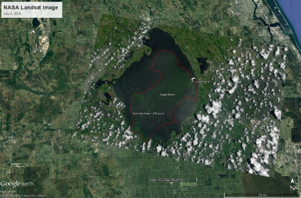 """New calculations estimate the algae bloom in Lake Okeechobee to be 239 square miles. Based on the latest images from NASA on July 2nd, the algae bloom has grown from 33 square miles on May 9th to now take up almost 1/3 of the lake. """"This toxic algae is what has been discharged into the St. Lucie Estuary and the Indian River Lagoon, making its way through our waterways and onto local beaches. We need to stop the discharges from Lake Okeechobee and send the water south the Everglades, where it is desperately needed."""" - Mark Perry, Executive Director"""