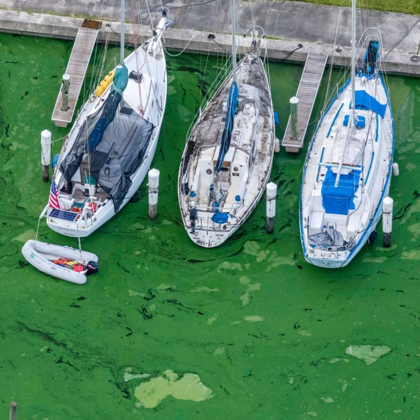 "stuart slime tour aerial sailboatsx3 1000 1250 In: John Moran's ""Florida's Summer of Slime: Stuart and Lake Okeechobee"" | Our Santa Fe River, Inc. | Protecting the Santa Fe River in North Florida"