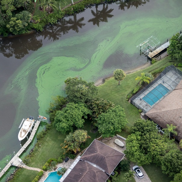 "stuart slime tour canal homes square 1000 1094 In: John Moran's ""Florida's Summer of Slime: Stuart and Lake Okeechobee"" | Our Santa Fe River, Inc. | Protecting the Santa Fe River in North Florida"