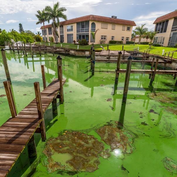 "stuart slime tour condos in the slime square 1000 8647 In: John Moran's ""Florida's Summer of Slime: Stuart and Lake Okeechobee"" | Our Santa Fe River, Inc. (OSFR) | Protecting the Santa Fe River in North Florida"