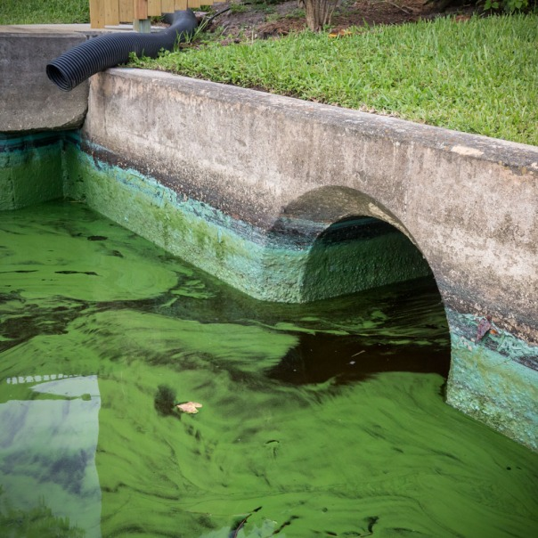 "stuart slime tour culvert 1000 9323 In: John Moran's ""Florida's Summer of Slime: Stuart and Lake Okeechobee"" | Our Santa Fe River, Inc. | Protecting the Santa Fe River in North Florida"