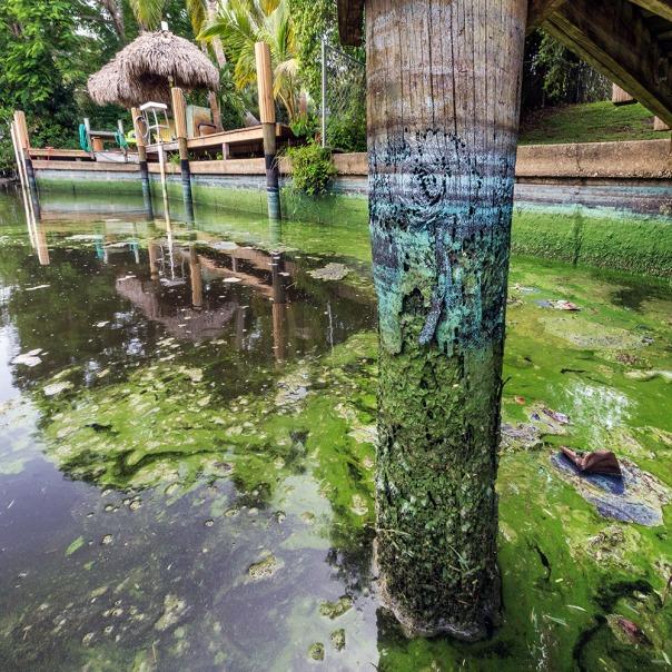 "stuart slime tour dock piling wide square 1000 9260 In: John Moran's ""Florida's Summer of Slime: Stuart and Lake Okeechobee"" | Our Santa Fe River, Inc. (OSFR) | Protecting the Santa Fe River in North Florida"
