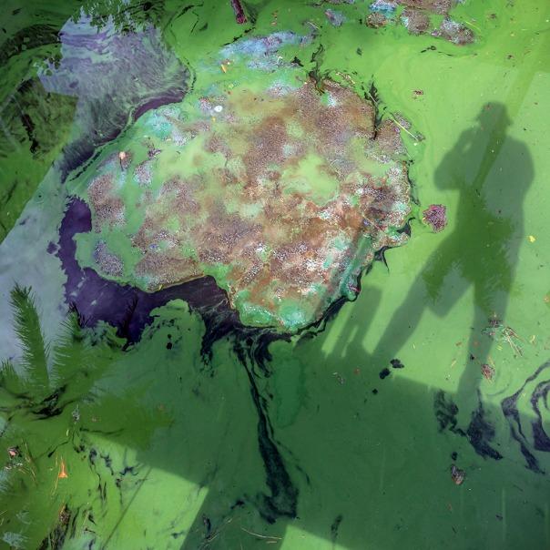 "stuart slime tour dock shadow square 8694 In: John Moran's ""Florida's Summer of Slime: Stuart and Lake Okeechobee"" | Our Santa Fe River, Inc. | Protecting the Santa Fe River in North Florida"