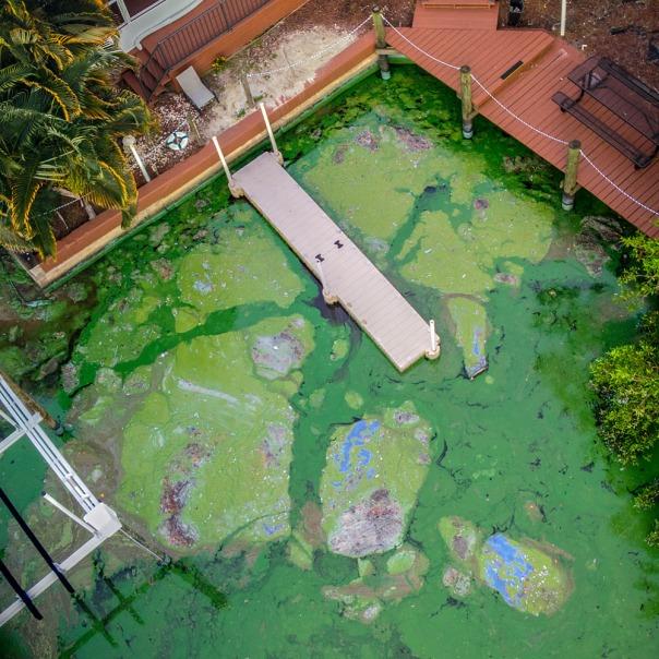 "stuart slime tour mavic aerial blue green algae 1000 In: John Moran's ""Florida's Summer of Slime: Stuart and Lake Okeechobee"" | Our Santa Fe River, Inc. | Protecting the Santa Fe River in North Florida"