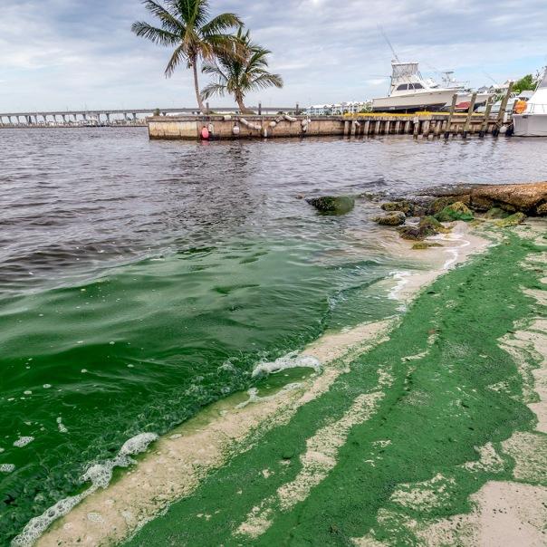 "stuart slime tour rio nature park beach square 1000 8412 In: John Moran's ""Florida's Summer of Slime: Stuart and Lake Okeechobee"" | Our Santa Fe River, Inc. | Protecting the Santa Fe River in North Florida"